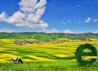 魏延安:互联网 农业什么样?