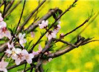 在淘宝村看见春天
