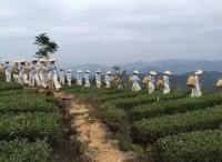 上万茶商触网,这个县城如何成为中国茶叶电商第一县