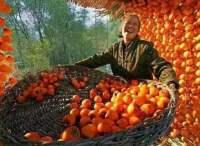 """农业农村部谈首届""""中国农民丰收节"""":将联合电商打造全民购物节"""
