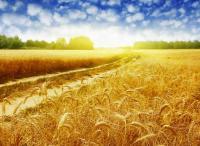 阿里巴巴集团《首届中国农民丰收节电商数据报告》发布