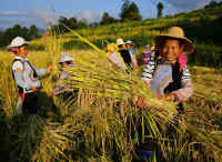 阿里巴巴电商脱贫:帮助贫困地区的优质农产品卖出去